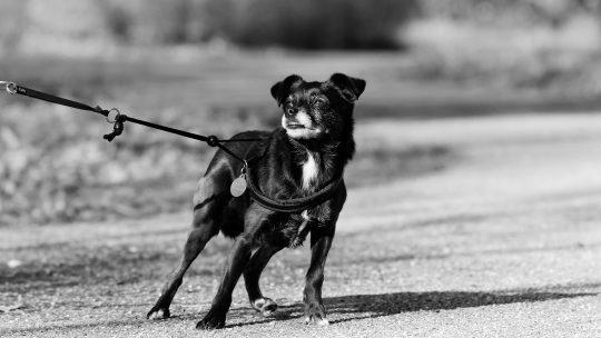 Votre chien a peur, que faire ?