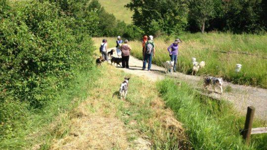 Rencontres entre chiens: comment être serein ?